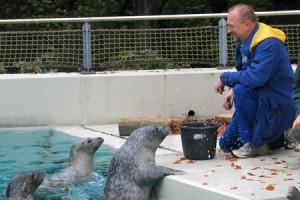 Essen mit Axel Schäfer - ob er nachher auch mit schwimmen kommt? Betriebspraktikum im Tierpark Bochum im Jahr 2007 Bildquelle: Büro Axel Schäfer